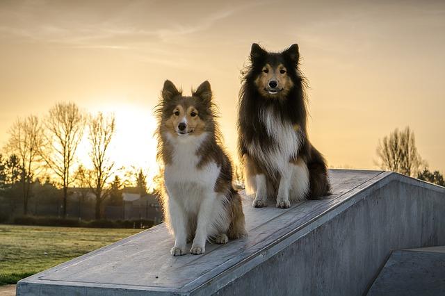 psi na plotě