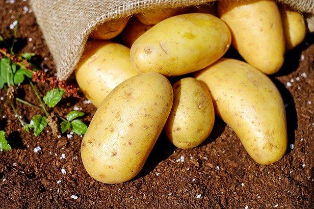 brambory na zemi.jpg