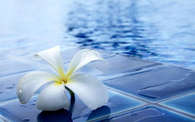 květ na břehu