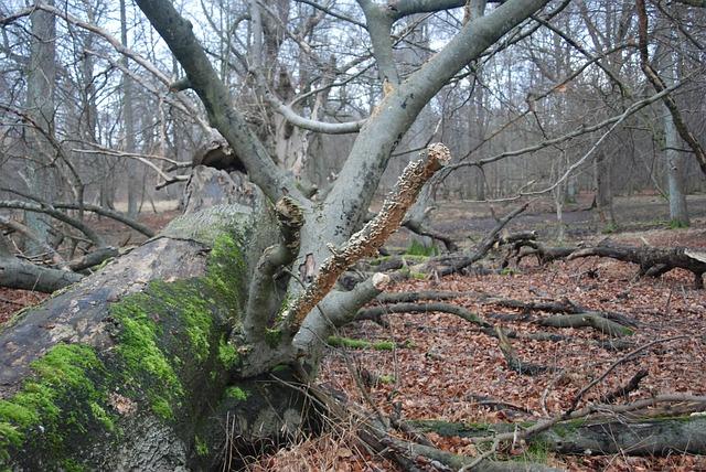 padlý strom v lese.jpg